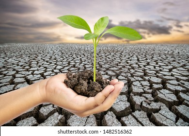 Plant trees to protect the topsoil and reduce global warming.