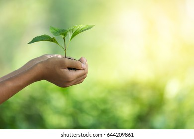 plant a tree.Symbol of spring and ecology concept