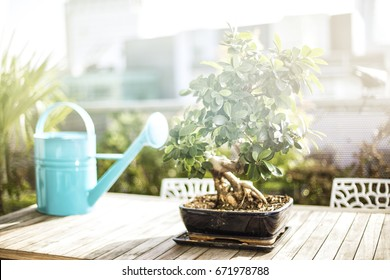 plant and turquoise watering can on the table