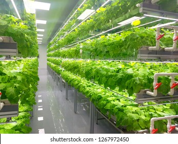 Plant vertical farms producing plant vaccines