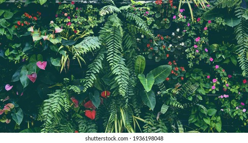 Plant wall with lush green colors, variety plant forest garden on walls orchids various fern leaves jungle palm and flower decorate in the garden rainforest background - Shutterstock ID 1936198048