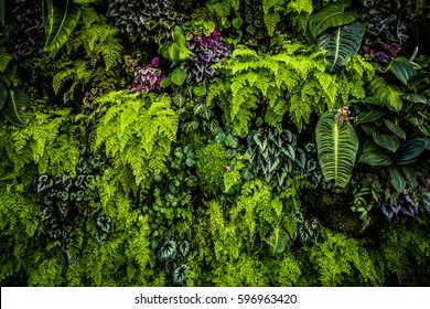 Plant wall with lush green colors