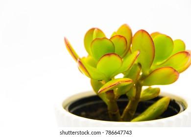 Plant in white vase