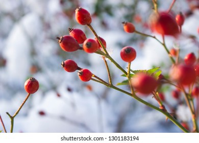 Plant in the winter