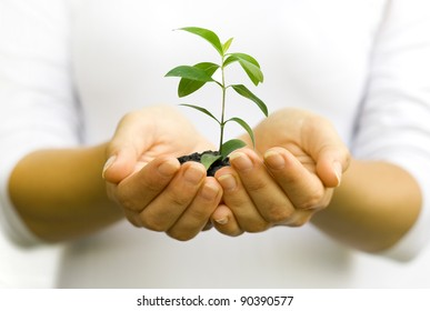 Plant in woman hands