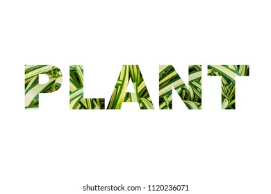 Plant word, clipping mask style, on white background.