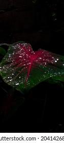 Planta verde com toques vermelhos e brilhantes, chuva