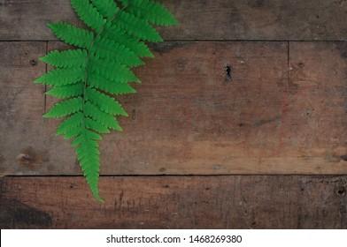 plantae leaf on wooden background