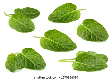 Plantain leaf isolated on white bacground. Collage.