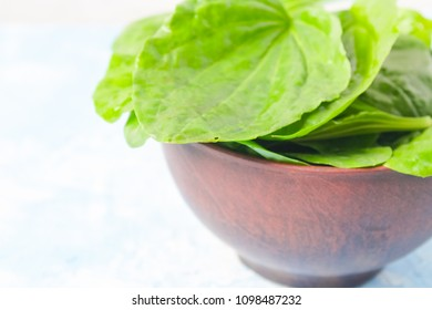 Plantain leaves on a wooden background. medical herbs.