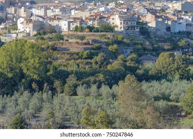 Plantation of olive trees. Spanish little, old, medieval town on background.