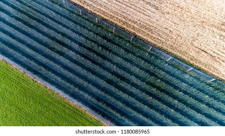 plantations with anti-hail nets view from above