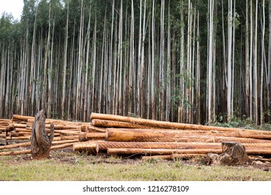 Plantations and logs, forestry industry