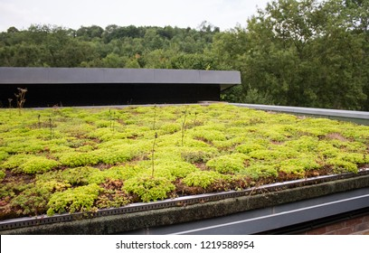 planted eco roof