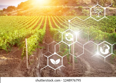 Planted on the field in a bright sunny day. Agriculture, agro-industry. Innovations and technologies. Scientific work and development of new methods and selection of varieties, genetic engineering.