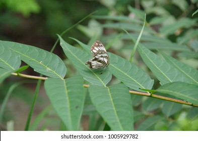The butterfly?Butterflies are planted on green plants.