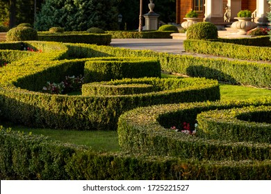 planted and trimmed boxwood bushes in the park greening, evergreen shrubs perennials