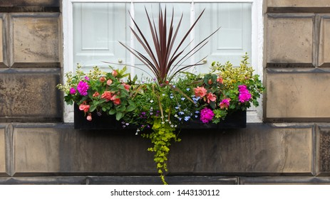A planter with blooming flowers on a window sill of a stone building in Edinburgh, Scotland, UK