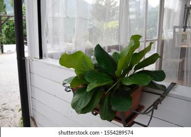Planter on Side of Italian Sunroom