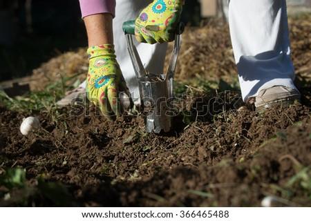 Planting Bulbs Flower Bulb Planter Outdoors Stock Photo Edit Now