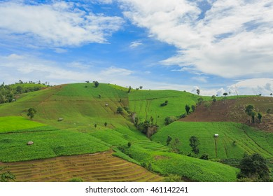 Planting crops on mountain