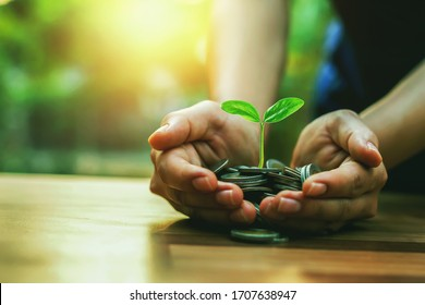 Planting crops on a pile of coins on hand Investment concepts in business
