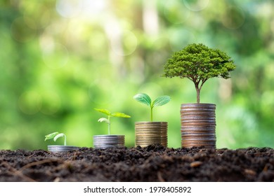 Planting and developing trees on coin piles as well as green nature background blur the concept of financial and economic growth.