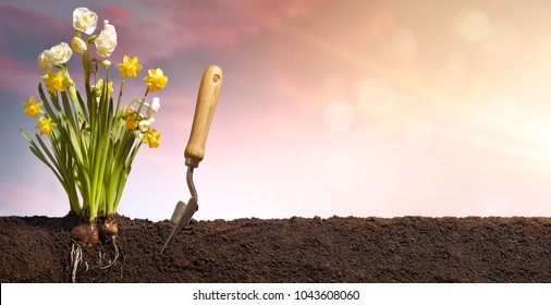 Planting flower at sunrise