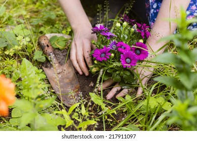 planting of flowers with hand of a woman