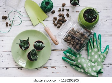 Planting flowers,succulents in the home. Work at home. Plants and gardening tools on wooden background