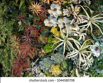 Planting foliage plants