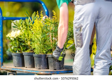 Planting Garden Trees by Caucasian Gardener. Spring Time Landscaping.