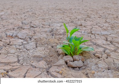 planting green sprout in dried cracked land to save our planet from water disaster