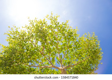 Planting green trees helps to increase oxygen for the world.
