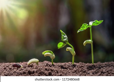 planting growing step with green nature background and sunrise