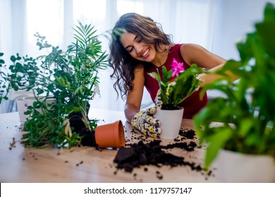 Planting home plants indoors. Hands of a young woman planting in the flower pot. Woman potting some plants in pots on a counter at home. female gardener planting flowers in pots