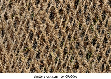 Planting Mat made of Coconut Fiber with Blades of Gras Coming Through