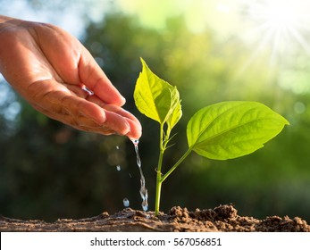 Planting and save forest concept. Male hand giving water to tree with sunlight and green background
