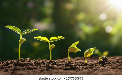 planting seed grow step concept in garden and sunlight.