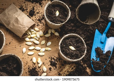 Planting seed into peat pot. Sowing pumpkin seeds in soil. Agricultural activity and gardening at spring. Plant nursery