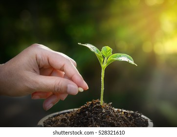 planting seed in soil