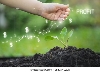 Planting seedling growing step in garden with sunshine. Concept of business growth, profit, development and success. Money growing in soil. Money growing concept,Business success concept.