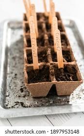 Planter des graines dans des pots de mousse de tourbe pour commencer un potager intérieur.