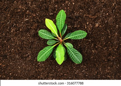 Planting a small plant on a pile of soil. Natural sandy, fertile soil background with ample copy space for type, letters or logos.