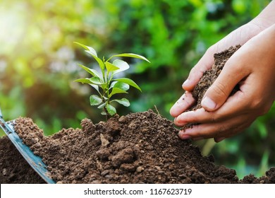 planting small tree in nature. eco concept