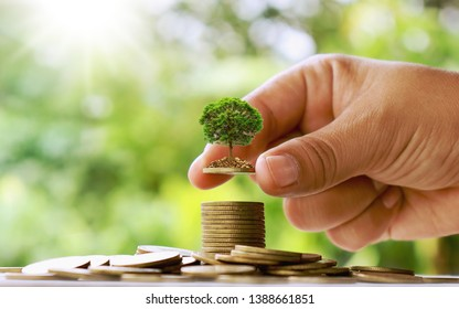Planting small trees by hand on coins and natural green backgrounds, financial accounting concepts and saving money.