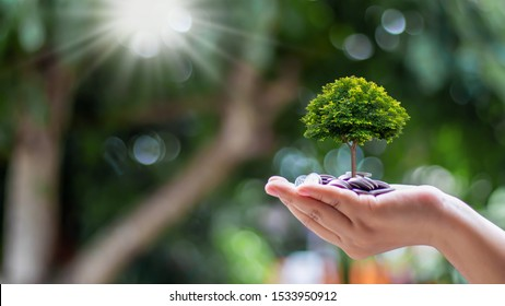 Planting small trees on coins and a natural green background, money growth concept.