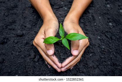 Planting small trees with two hands on the ground. The idea of protecting the environment and reducing global warming.