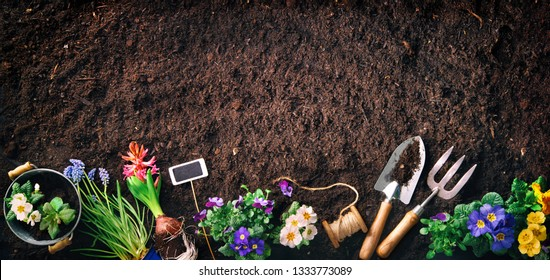 Planting spring flowers in the garden. Gardening tools and flowers on soil