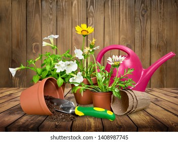 Planting spring flowers in the sunny garden          - Image